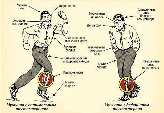 свободный тестостерон норма у мужчин и женщин