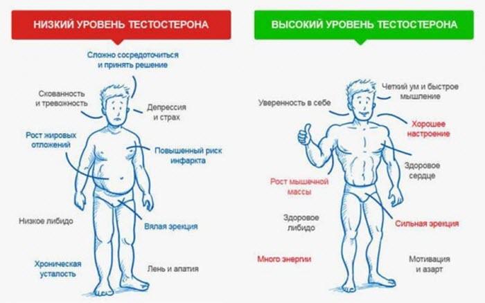 андрогены у мужчин