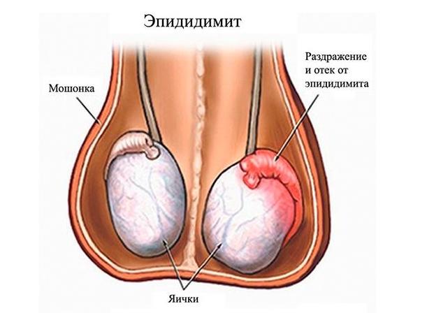 почему при оргазме выделяется мало спермы